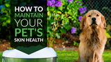 How to Maintain Your Pet's Skin Health