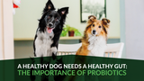A Healthy Dog Needs a Healthy Gut: The Importance of Probiotics