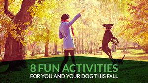 8 Fun Activities For You And Your Dog This Fall