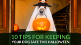 10 Tips for Keeping Your Dog Safe This Halloween