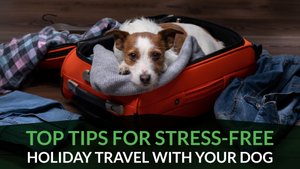 Top Tips for Stress-Free Holiday Travel With Your Dog