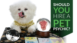 Should You Hire a Pet Psychic?