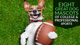 Eight Great Dog Mascots of College & Professional Sports