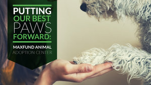 Putting Our Best Paws Forward: MaxFund Animal Adoption Center