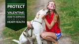 Protect Your Furry Valentine: How to Improve Your Dog's Heart Health