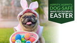 Hippity, Hoppity, Dog-Safe Ways to Celebrate Easter