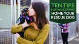 Ten Tips for Welcoming Home Your Rescue Dog
