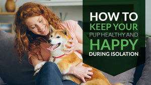 How to Keep Your Pup Happy and Healthy During Isolation