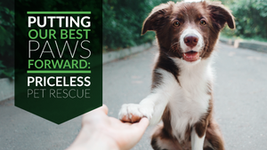 Putting Our Best Paws Forward: Priceless Pet Rescue