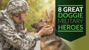8 Great Doggie Military Heroes