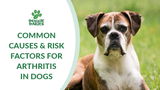 Common Causes & Risk Factors For Arthritis In Dogs