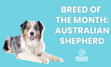Australian Shepherd: From the Farm to the Family Room