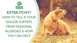 EXTRA ITCHY? HOW TO TELL IF YOUR DOGGIE SUFFERS FROM SEASONAL ALLERGIES & HOW YOU CAN HELP