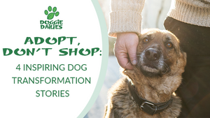 Adopt, Don't Shop: 4 Inspiring Dog Transformation Stories
