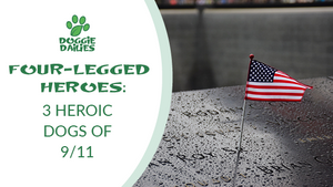 Four-Legged Heroes: 3 Heroic Dogs of 9/11