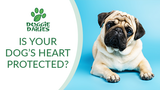 Why Omega 3 for Dogs is Important for Heart Health