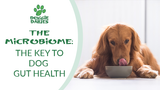 The Microbiome: The Key to Dog Gut Health