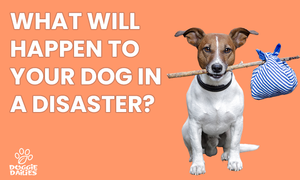 From Microchips to Pet Friendly Hotels: Tips for Preparing Your Dog For Evacuations