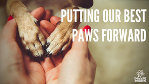 Putting Our Best Paws Forward...