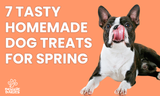 7 Tasty Homemade Dog Treats for Spring