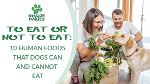 To Eat or Not to Eat: 10 Human Foods that Dogs Can and Cannot Eat