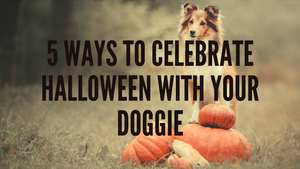 5 WAYS TO CELEBRATE HALLOWEEN WITH YOUR DOG