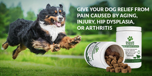 Hip & Joint Care For Dogs | Made In The USA