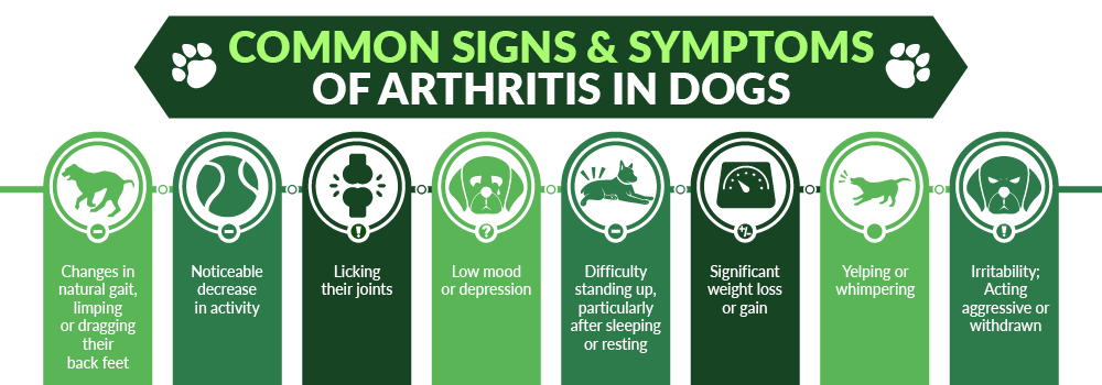 Common Signs and Symptoms of Arthritis in Dogs