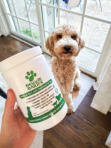 Doggie Dailies Product Review