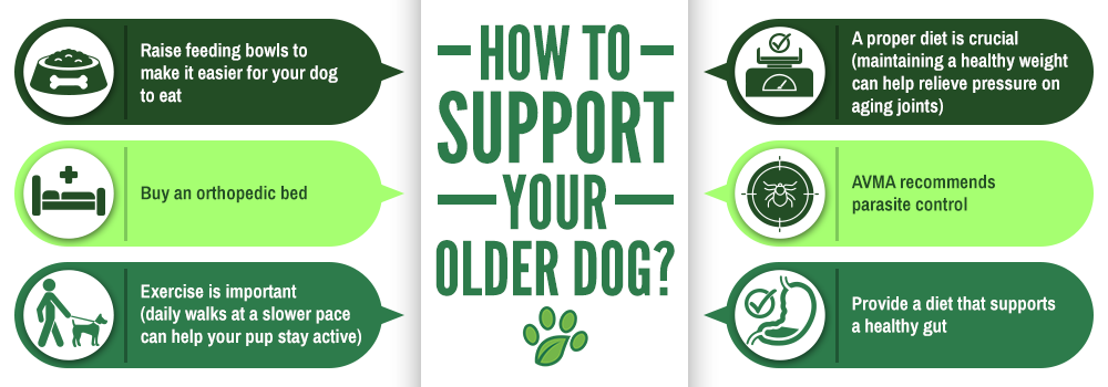 How To Support Your Older Dog?