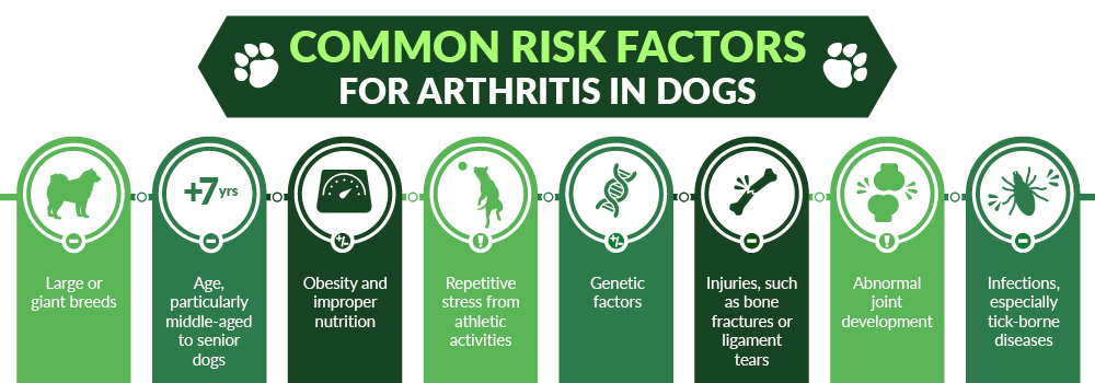 Common Risk Factors For Arthritis in Dogs