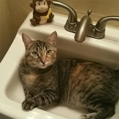 Ashoka the Sink Monitor