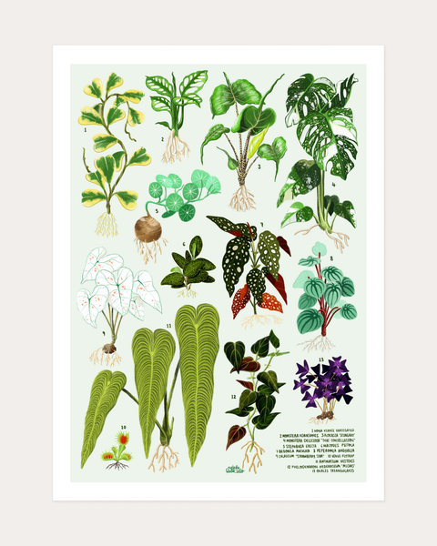House Plants Vol I Print