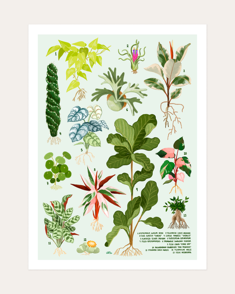 House Plants Vol II Print