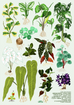 House Plants Vol I