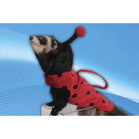 Lady Bug Costume / Costume Coccinelle