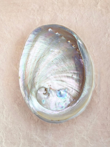 Large Natural Australian Abalone Shell for Smudging (15cm)