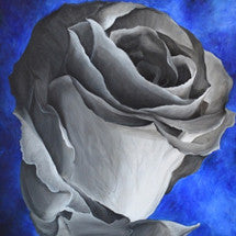 Rose Blossom on Blue Background