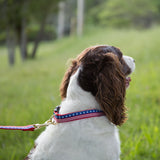 Small Narrow Dog Collar: Stars and Stripes
