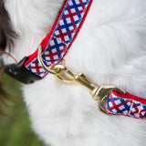 Medium Dog Collar: Parker