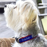 Small Dog Collar: We the People