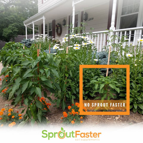SproutFaster Soil Supplement