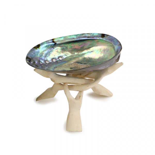 SOUL SHELL - POLISHED SHELL WITH WHITE STAND - Kiwi Collections