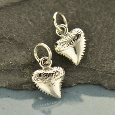 Small Shark Tooth