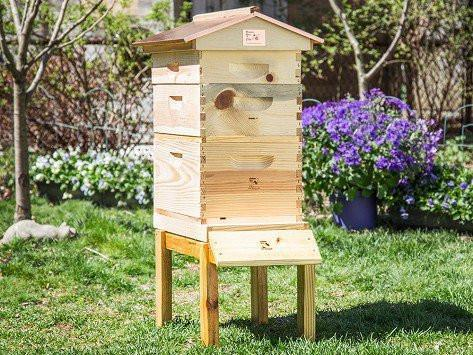 Urban Beekeeping Starter Kit