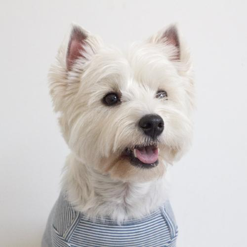 Striped Baby T-Shirt Blue - Sir Dogwood