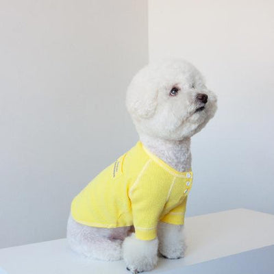 Waffle T-Shirt Yellow - Sir Dogwood