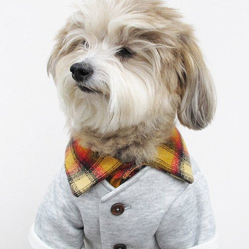 New! Campus Cardi - Sir Dogwood