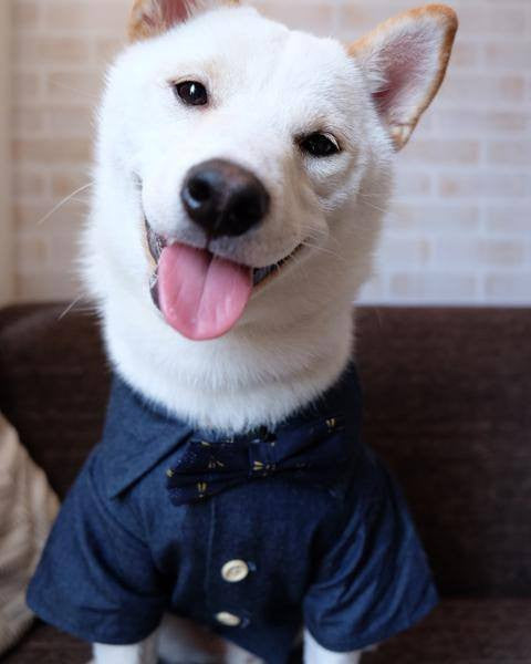 Canadian Tuxedo Shirt For Gentle Giants - Sir Dogwood