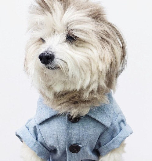 Chambray Button Down - Sir Dogwood